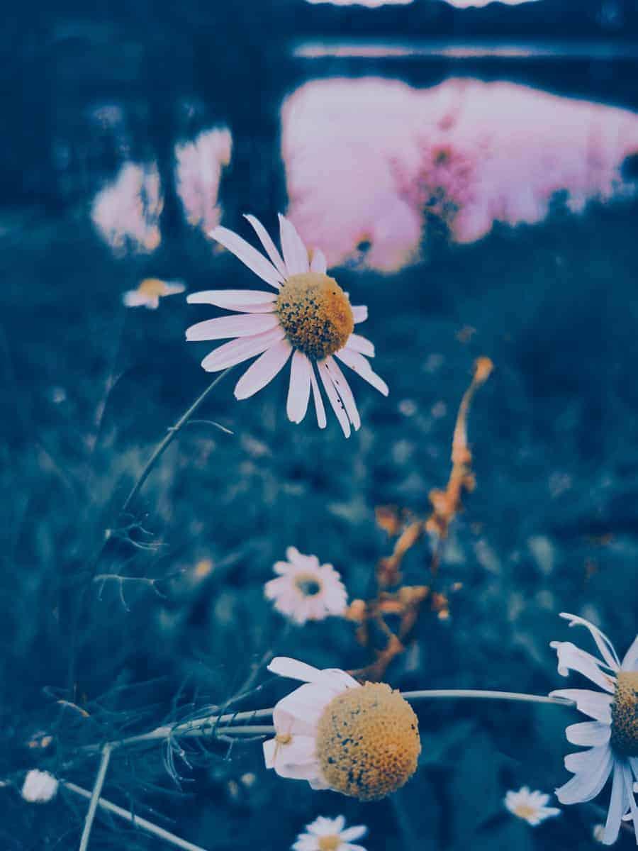 Jak být šťastnější: Dělej méně věcí ze soucitu