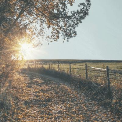Jak se smířit se smrtí a životními ztrátami